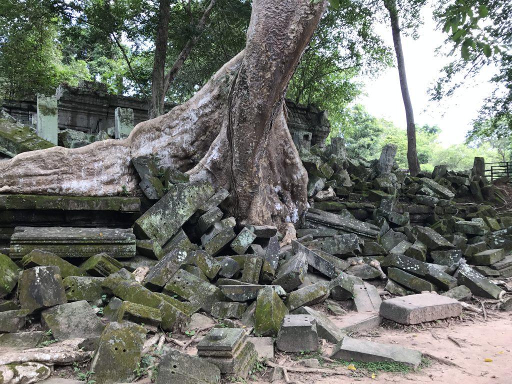 ベンメリア巨木