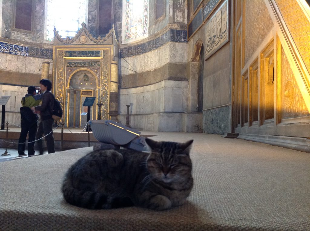 アヤソフィア猫