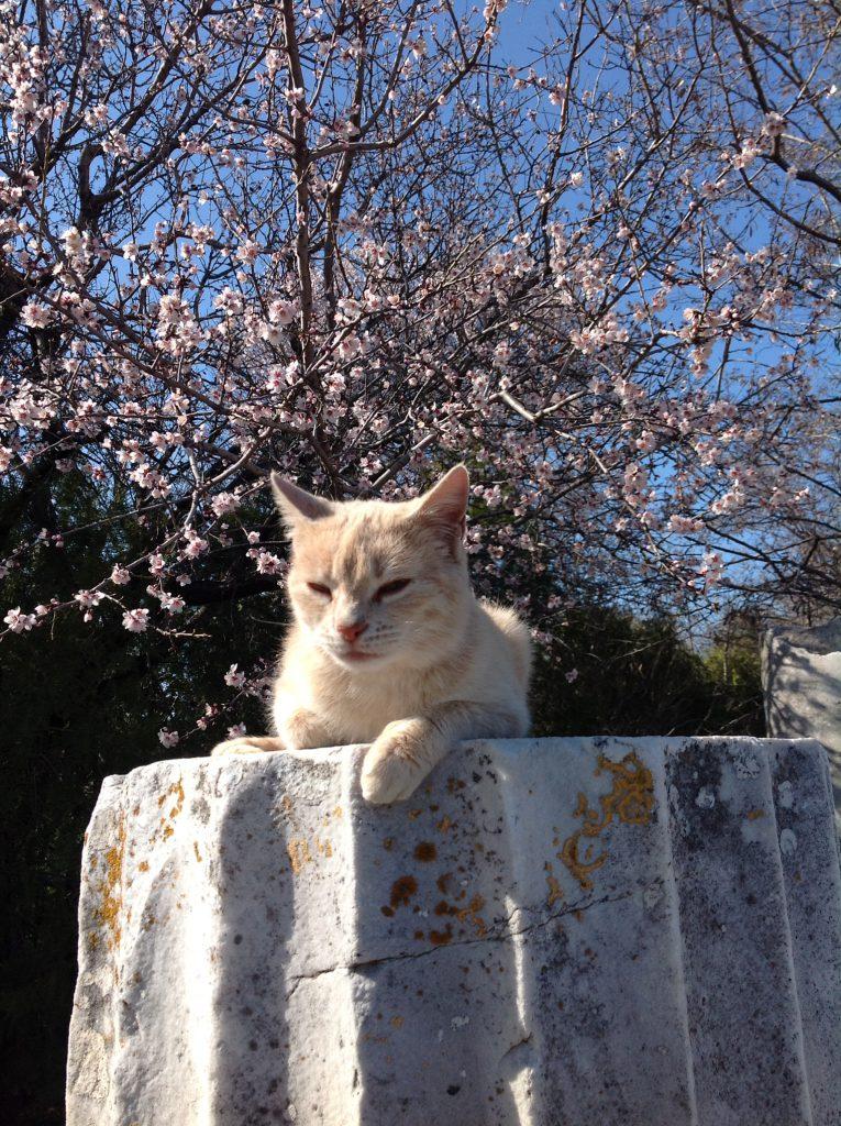 トロイの猫