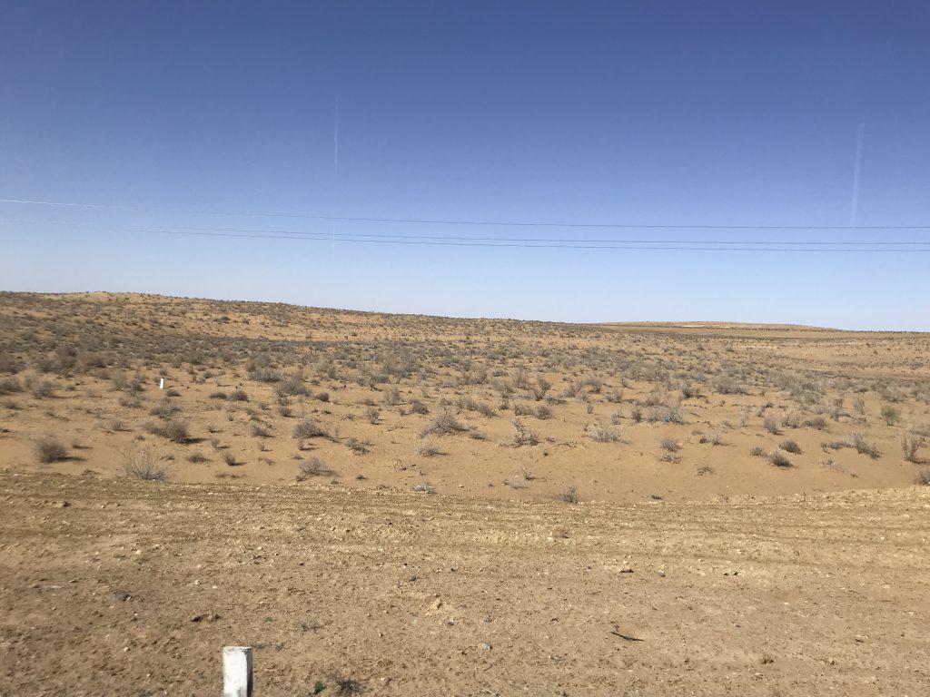 キジルクム砂漠 ラクダ草
