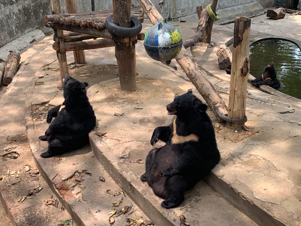 ヤンゴン動物園 熊