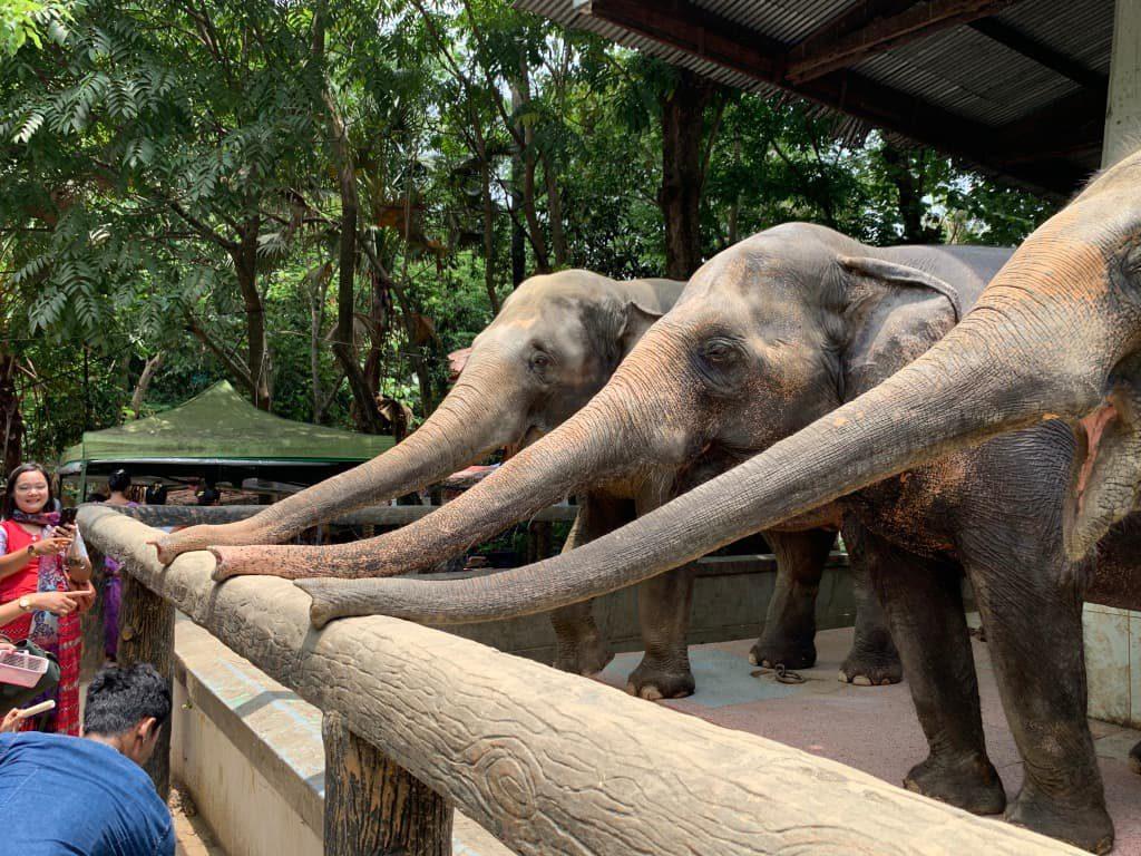 ヤンゴン動物園 象