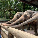 ヤンゴン動物園の入場料やマップに所要時間は?40度の灼熱動物園