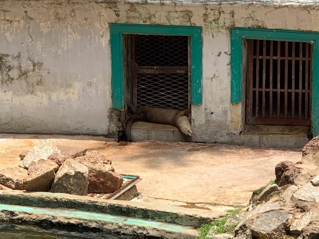 ヤンゴン動物園 カワウソ