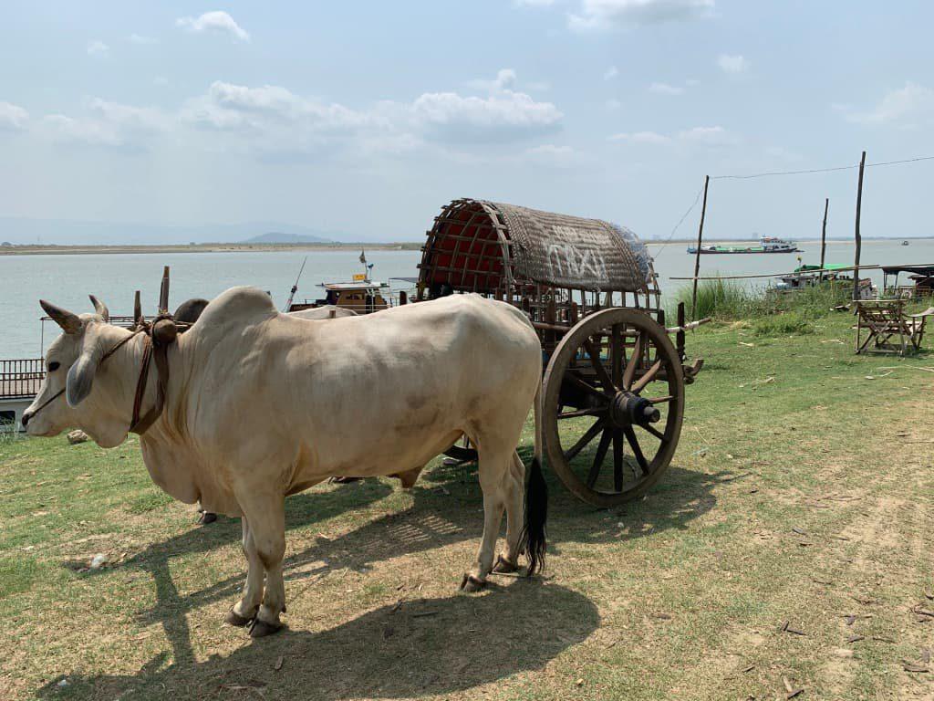 ミングォン 牛タクシー