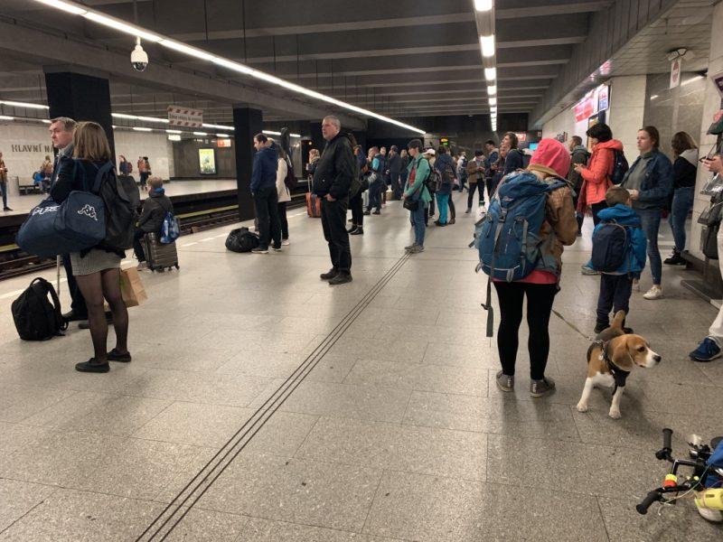 プラハ地下鉄犬